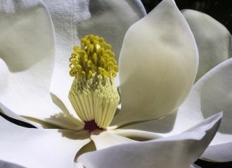 About Magnolia Title Company